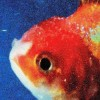 Vince Staples - Big Fish Theory: Album-Cover